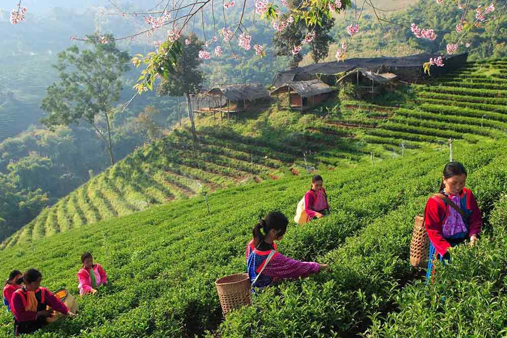 viaggio-fotografico-Thailandia-9