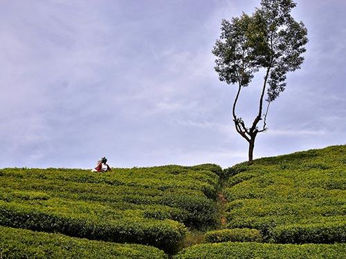 viaggio-fotografico-in-Sri-Lanka-4